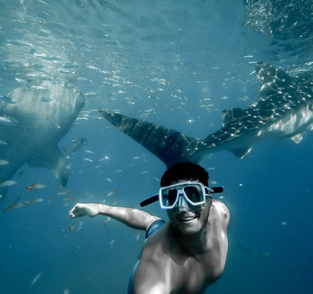 Great White Shark – Scuba Diving off Redboats